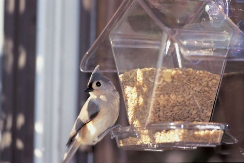 window bird feeders in Seed Feeders